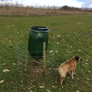 Arch and the pheasant feeder